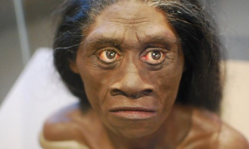 The Discovery of the Homo Floresiensis